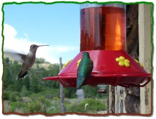 Hummingbirds feed at our feeders all summer.
